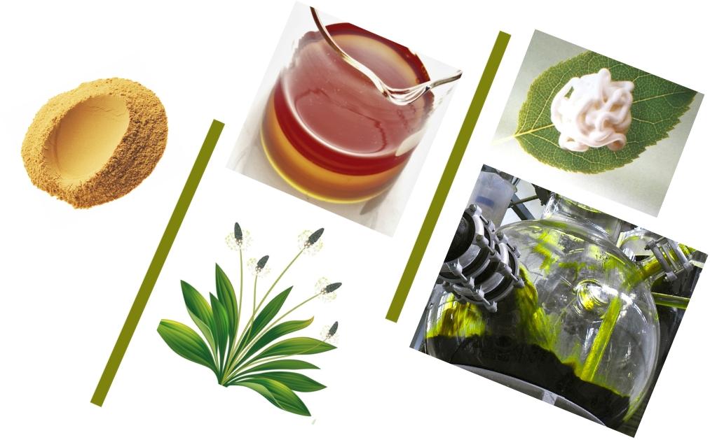gehrlicher herbal extracts